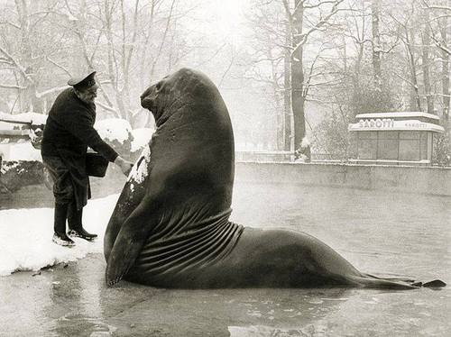 Roland: Gargantuan Elephant Seal From Berlin