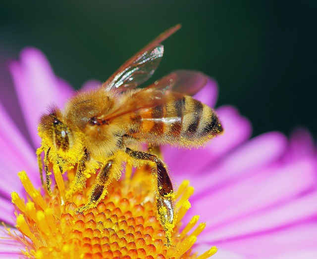 The Secret World of Bees
