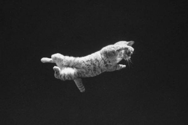 The Falling Cat Phenomenon: How NASA Trained Astronauts For Zero Gravity