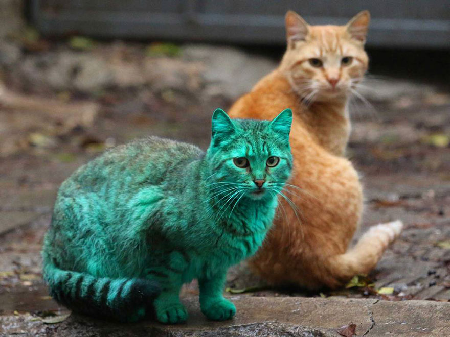 Cats These Days With Their Trendy Hair...What Can You Do?