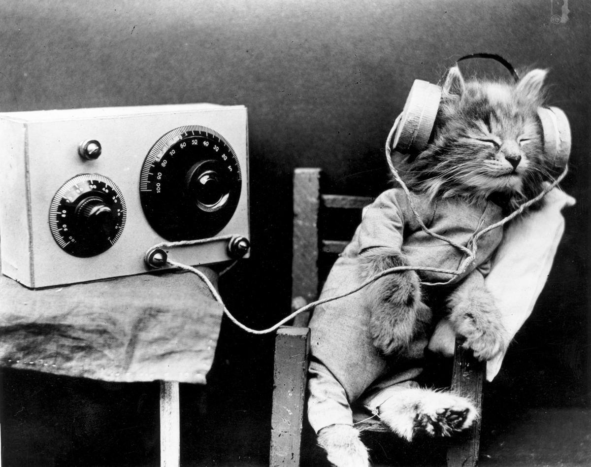 Cats Love Species-Specific Music