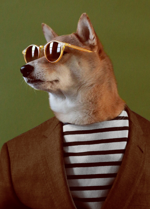 Menswear Dog Is Dripping With Badassery