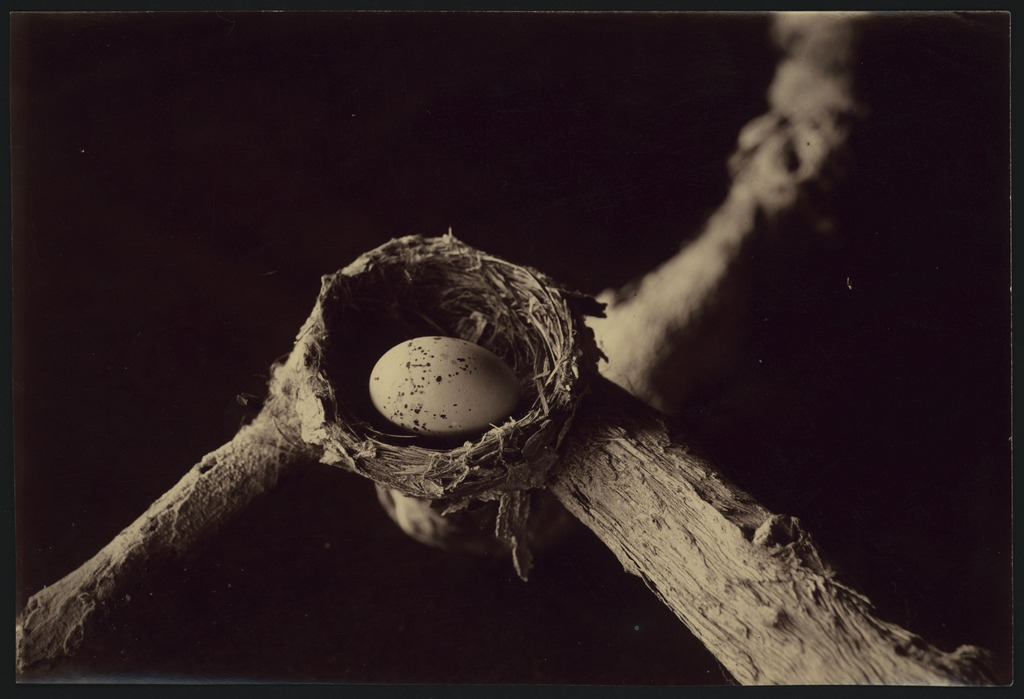Every Picture Tells A Story: Nest Of The Lemon-Breasted Flycatcher