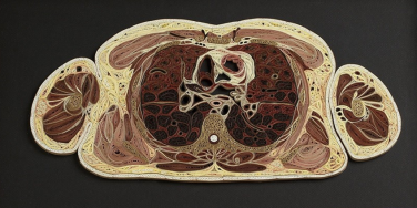 Intricate paper cross sections of human bodies by Lisa Nilsson