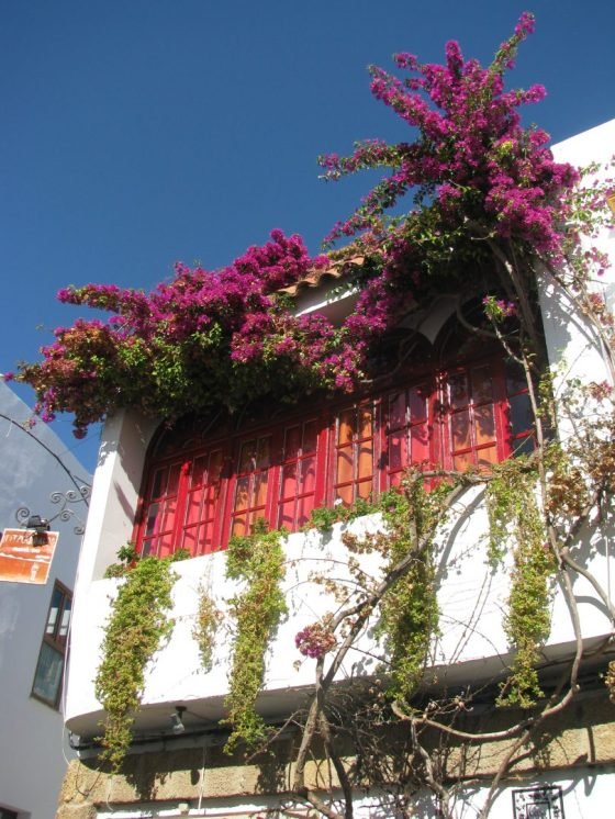A Sunny Terrace in Conil de la Frontera 2008