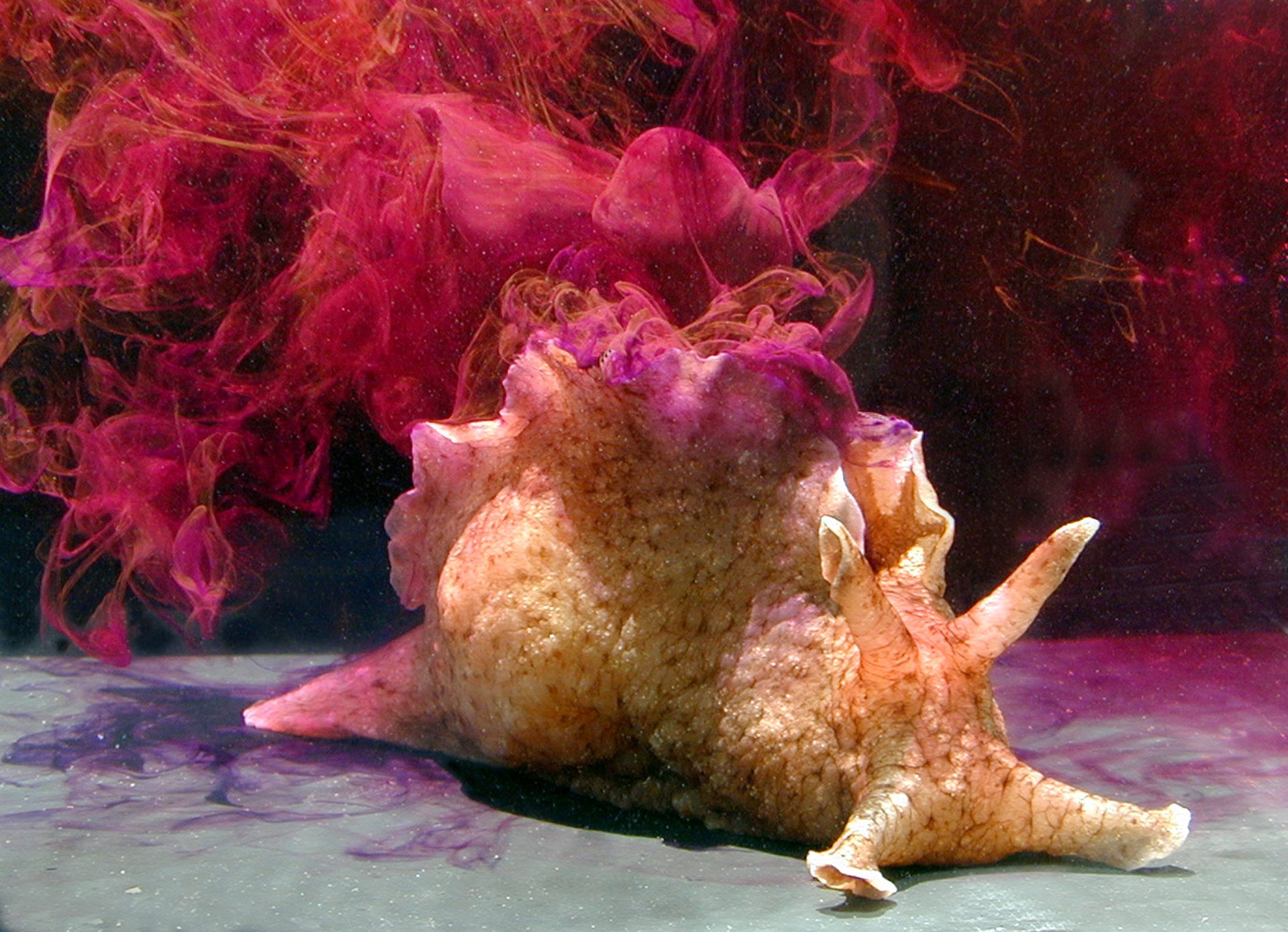 Say hello to the slimy end of cute: the Californian Sea Hare