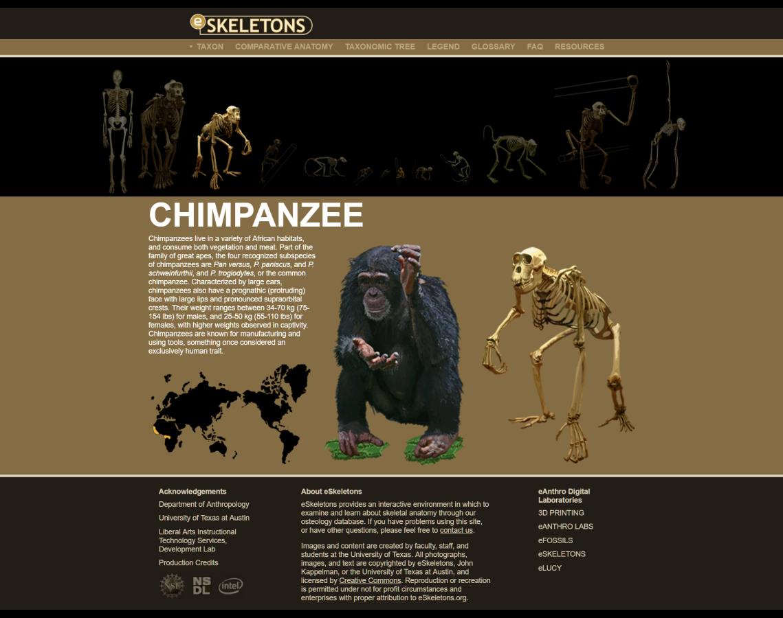<3 The Internet: eSkeletons of primates, monkeys and homo sapiens