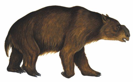 Ancient Australian Megafauna: Diprotodon optatum