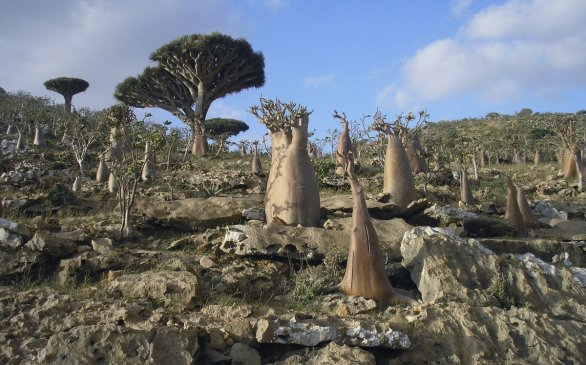 Welcome to a strange and forgotten alien world: Socotra