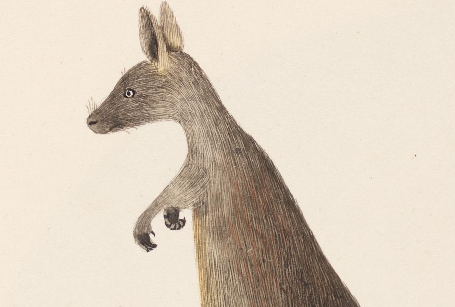 kangaroo-1790s